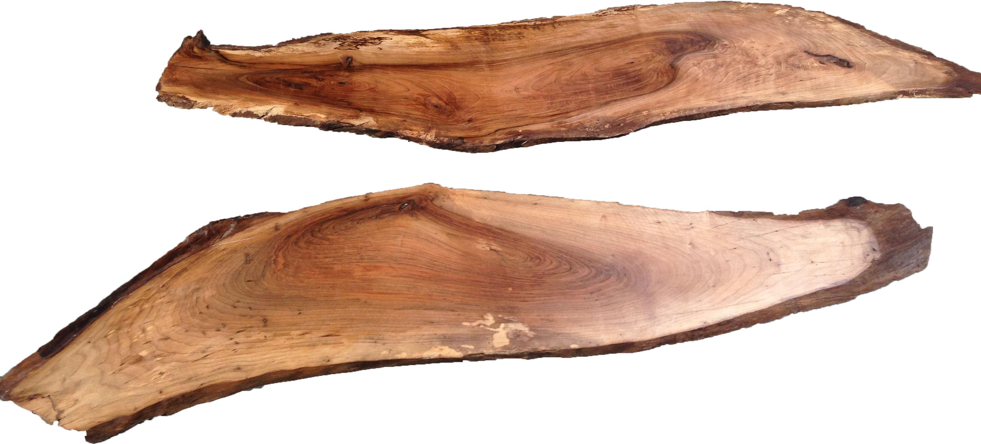 Ecorce de bois
